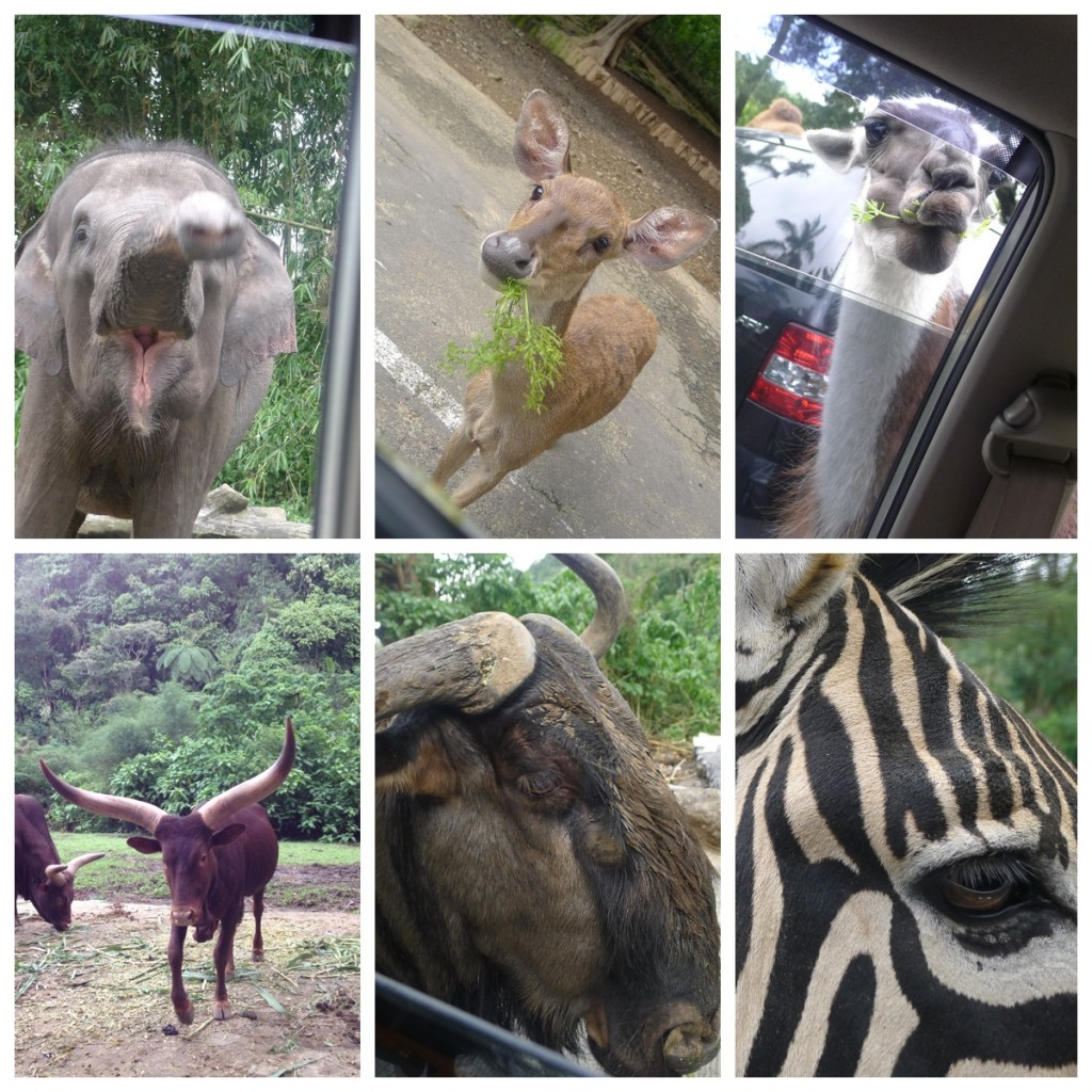 Feed the animals at Taman Safari!