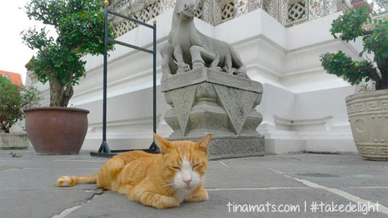 This cat guards Wat Arun.